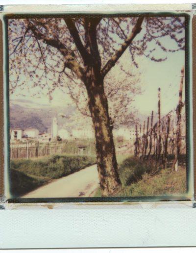 Polaroid_2016_049