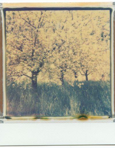 Polaroid_2016_050
