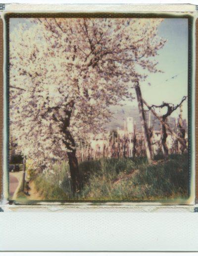 Polaroid_2016_051